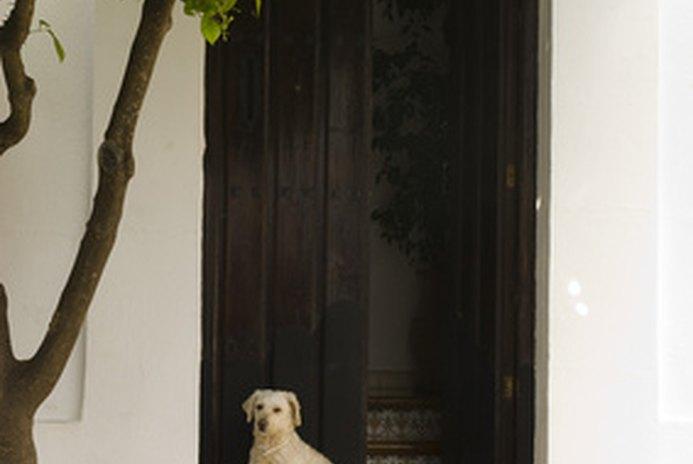 Screen Doors for Dogs