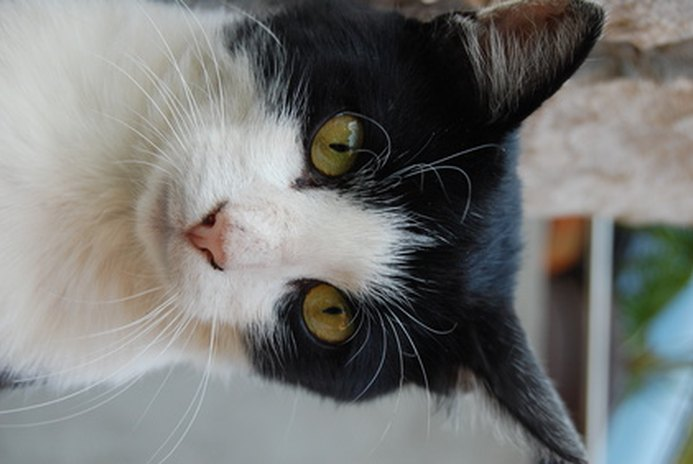 Dangers for Dogs of Eating Cat Litter