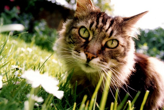How To Use Vinegar For Cat Repellent Pets