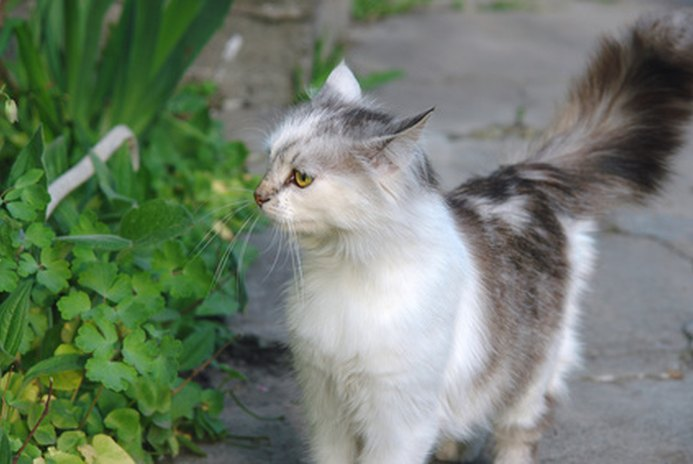 Edible Grass for Cats