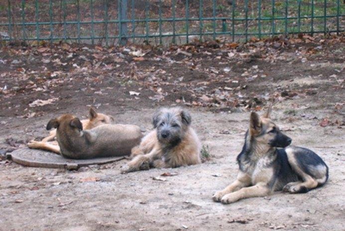 Canine Bordetella Side Effects