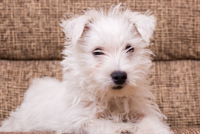 How to Keep Your Puppy's Hair Soft
