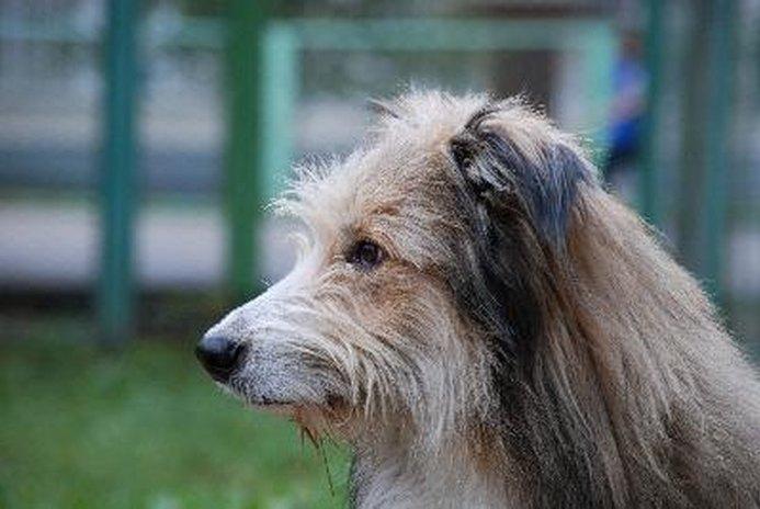Sulphur Shampoo for Dogs