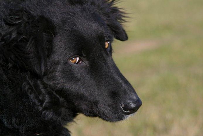 How to Housetrain a Stubborn Dog