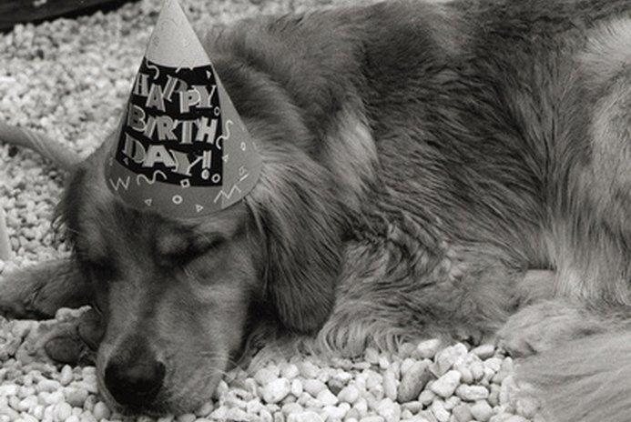 Birthday Stuff for Dogs