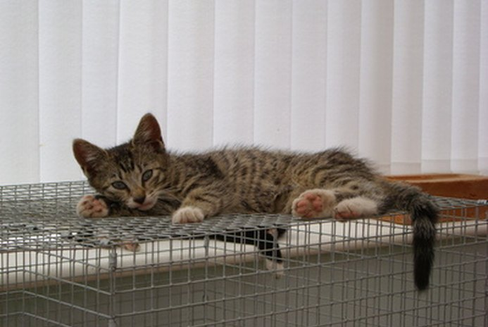 How to Build Cat Kennels & Cages