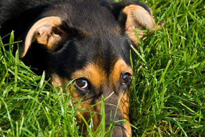 10 Commandments of Dog Ownership