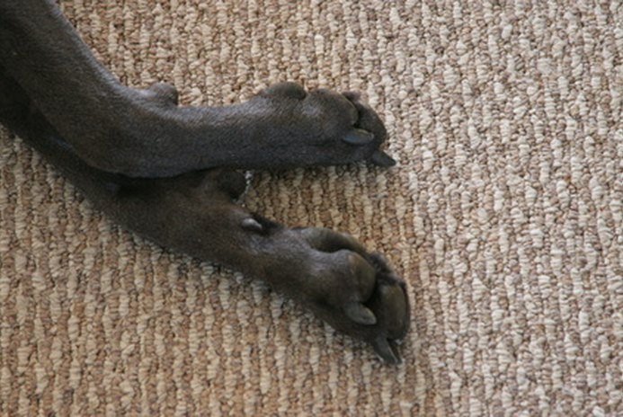 How to Clean Muddy Dog Paws Before Coming In
