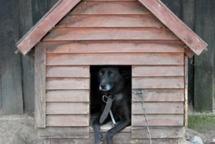 How to Stop an Outside Dog From Barking at Night
