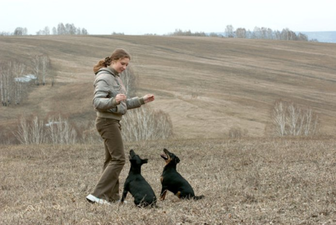 How to Handle an Overly Jealous Dog