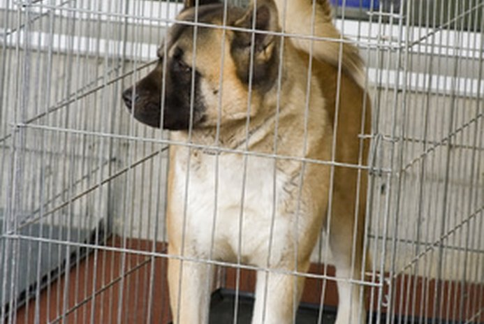 How Long Should a Dog Be Left in a Crate?