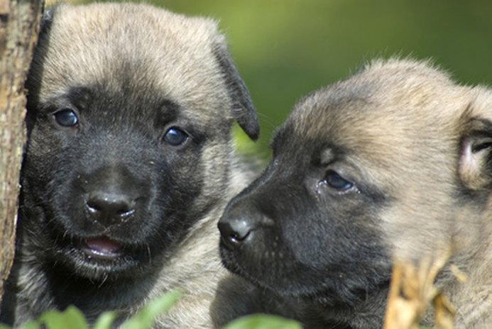 How to Train a Growling Puppy