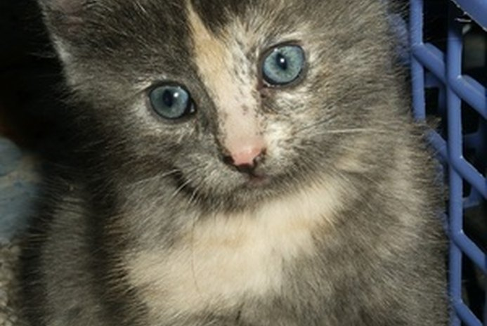 What Can You Do for a Kitten That Has Foul-Smelling Gas?
