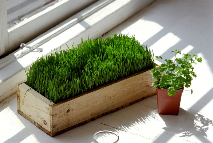 What Are the Nutrients in an Ounce of Wheatgrass?
