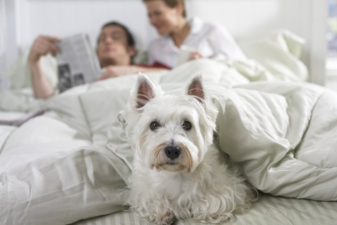 How to Control a Scottish Terrier's Bark