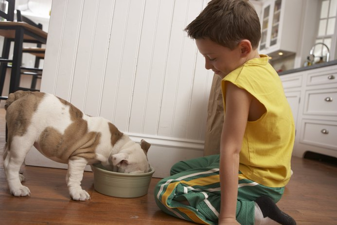 How Often Should You Rotate Dog Food?