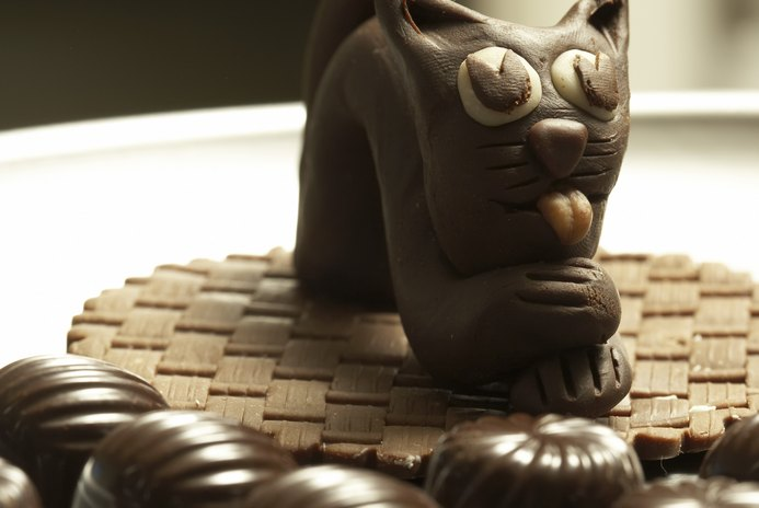 Is Chocolate Poisonous for Cats?