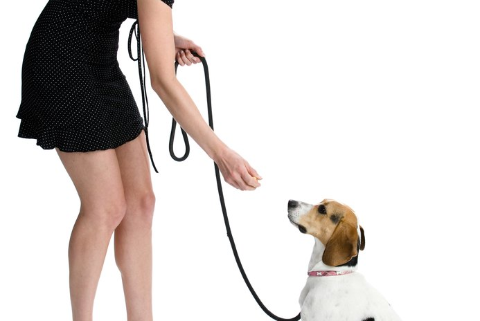 How to Scold a Puppy for Bad Leash Behavior