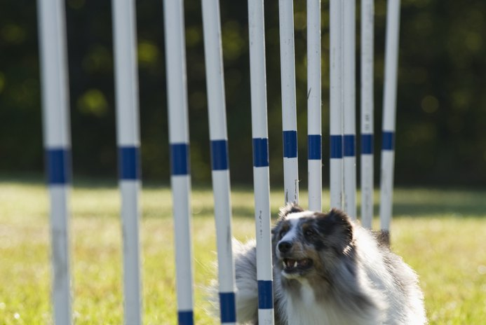 AKC Agility Equipment Regulations