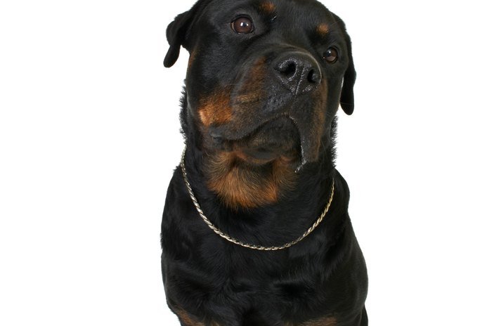 Are Rottweilers Born With Markings?