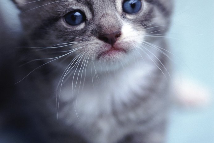 Why Do Baby Kittens Have Their Eyes Stuck Together?