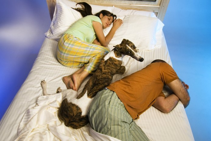 Dogs Sleeping With People on Their Beds