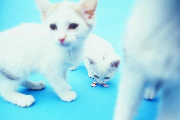 How Rare Are Albino Kittens?