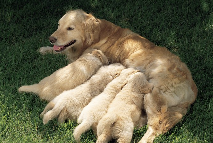 Can You Take a Dog Away From Its Mom Before 6 Weeks?