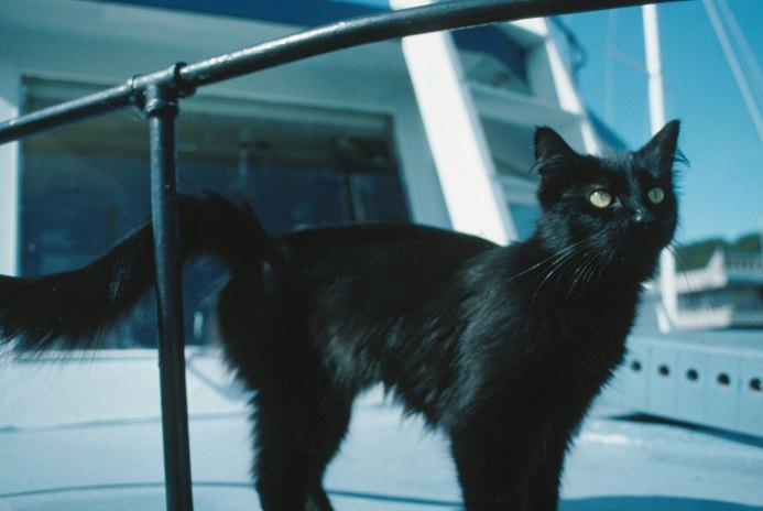 Eosinophilic Enteritis in Cats