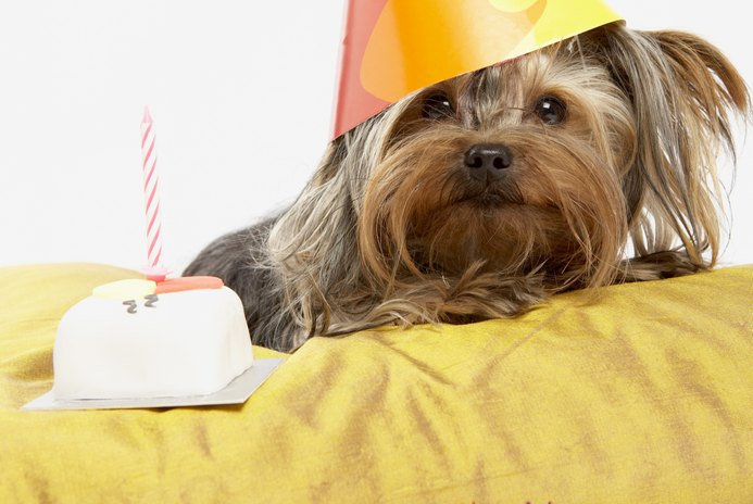 How to Celebrate a Puppy's Birthday