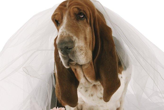 Creative Ideas for Wedding Dog Collars