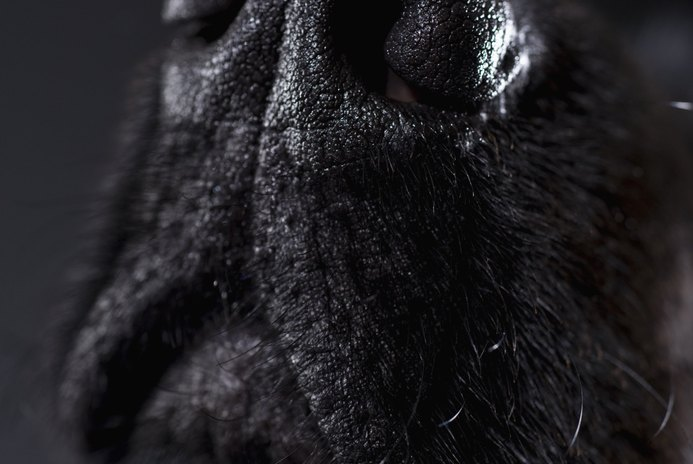 What Makes a Dog's Whiskers Curl?