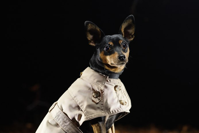 Sewing Patterns to Make Dog Coats