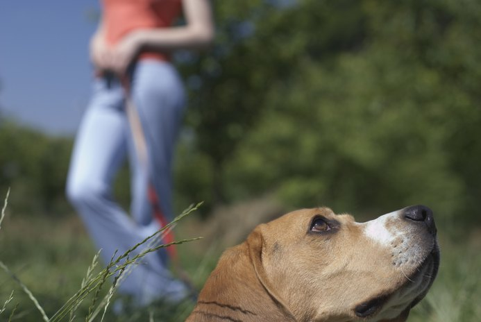 Hyperactive Beagles