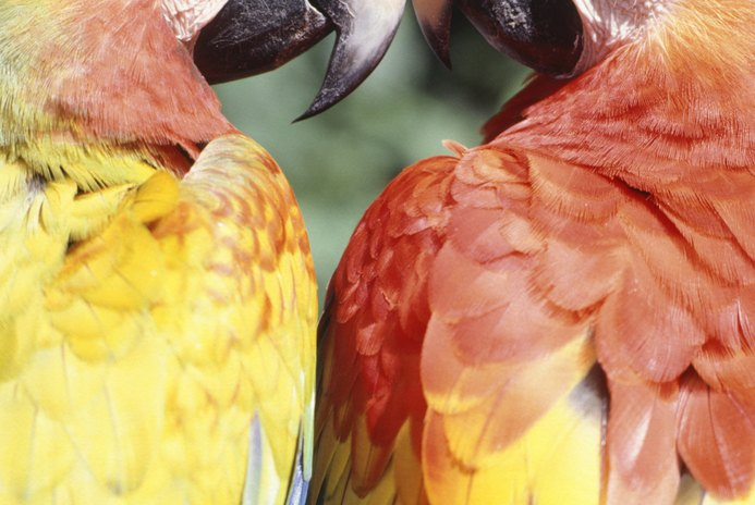The Problem of Jealous Parrots