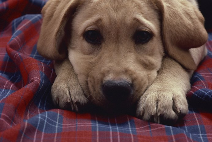 Can Dogs Sense When Another Dog Dies?