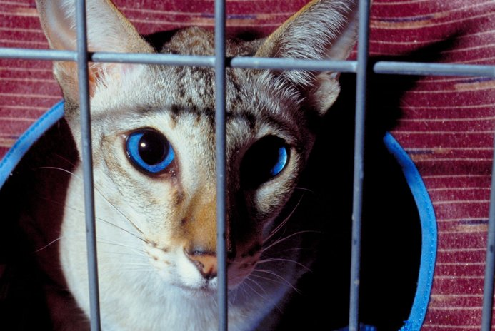 Outdoor Fencing for Cats