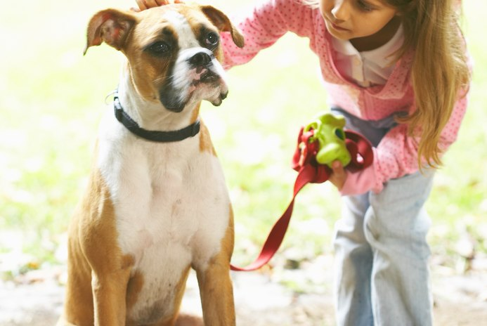 How to Train a Boxer Dog to Obey