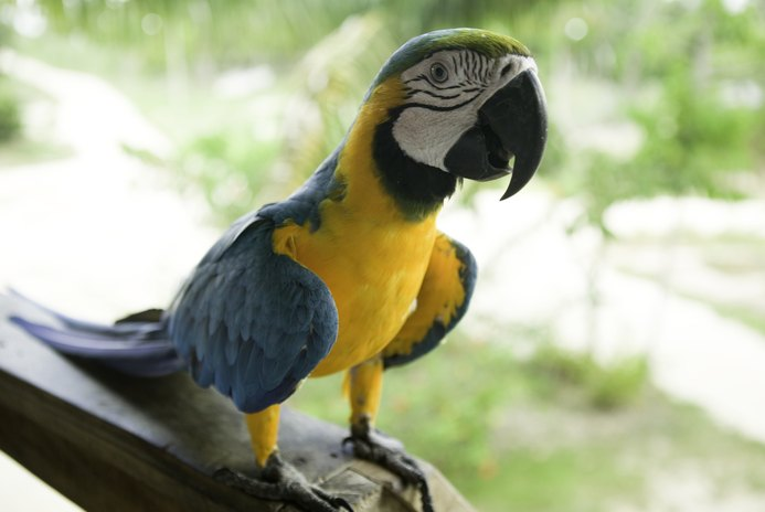 What Is the Difference Between a Parrot & a Parakeet?