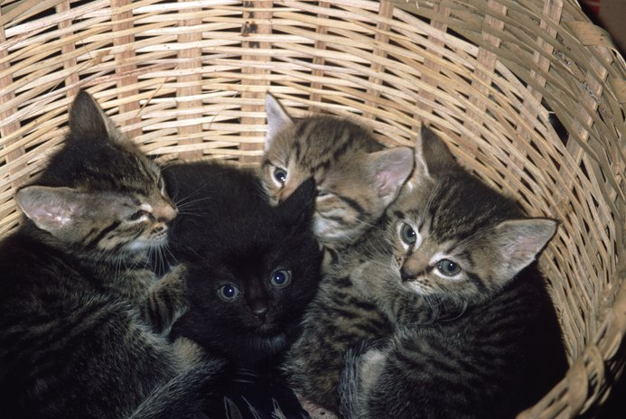 How Long Does It Take to Wean Kittens From Their Mom?