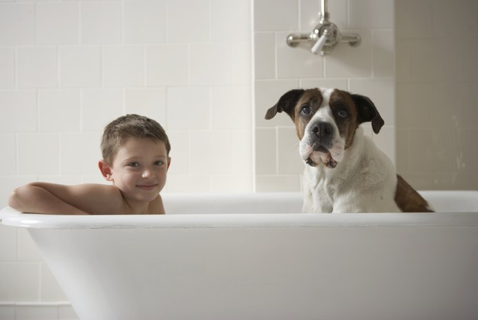 Dog Shampoos