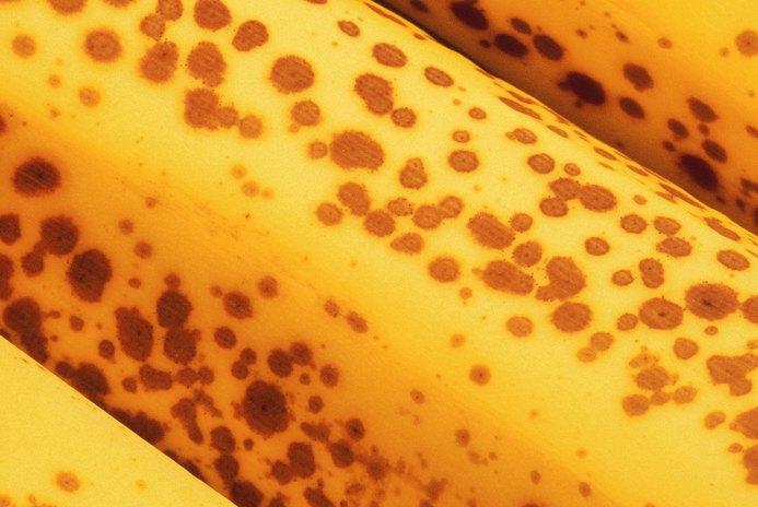 A Recipe for Dog Treats With Ripe Bananas