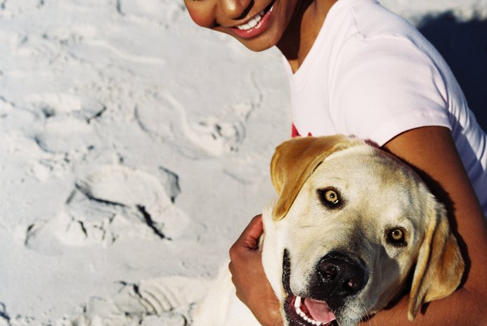 What Are the Ten Top Popular Dogs in America?