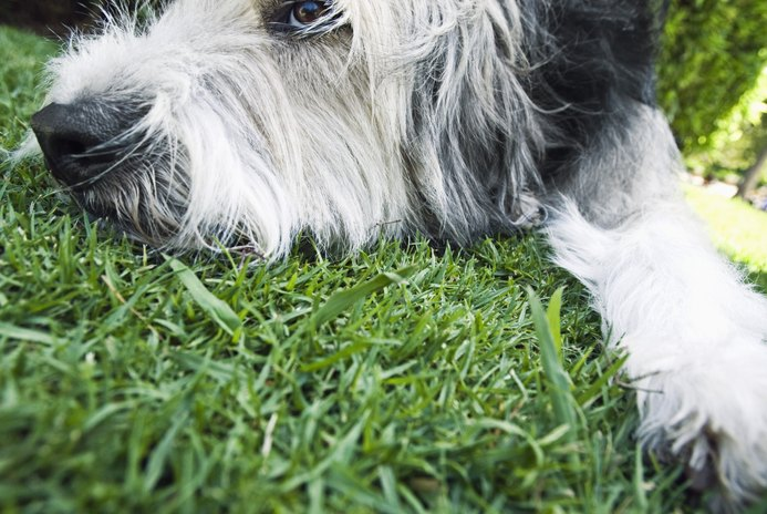 Help for Dog Hair That's Everywhere