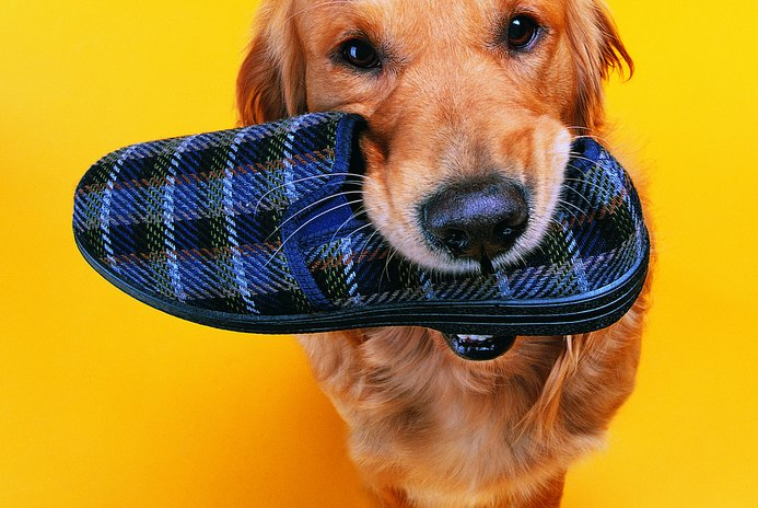 Dog Shoes That Protect Paws