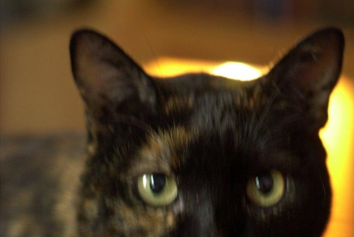 Alprazolam Vs. Acepromazine for Cats