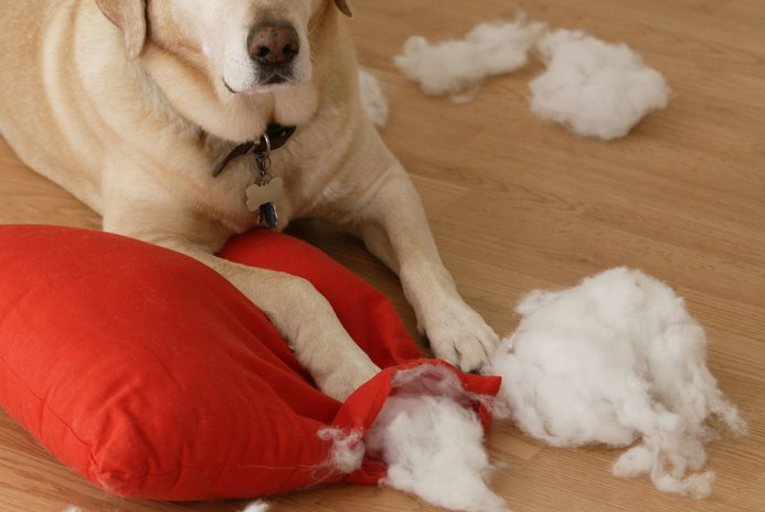 Destructive Puppy Behavior