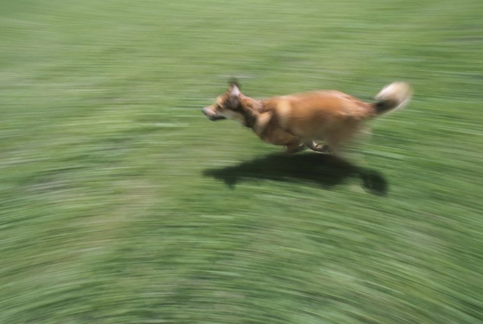 How to Stop Dogs From Running Away