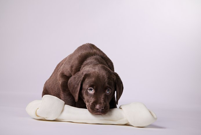 What Foods Are Harmful to Dogs?