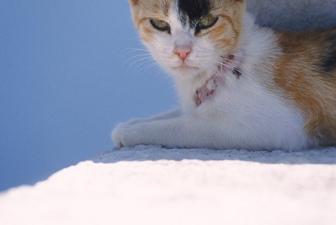 Aggression Medication for Cats
